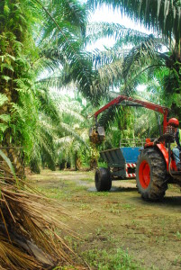 Palm-Oil-Plantation-Industry