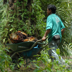 Palm oil helped alleviate the quality of life