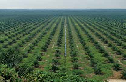 the palm oil industry in malaysia economics essay Palm oil industry is a prominent industry in malaysia, creating economic growth and development for instance, the government helped roughly 90,000 low-income.