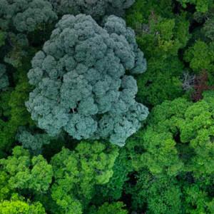no-deforestation
