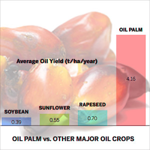 oil-palm-vs-others-oil-2014-3