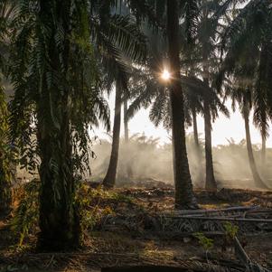 amazing-palm-oil