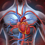 Saturated Fats and Coronary Heart Disease