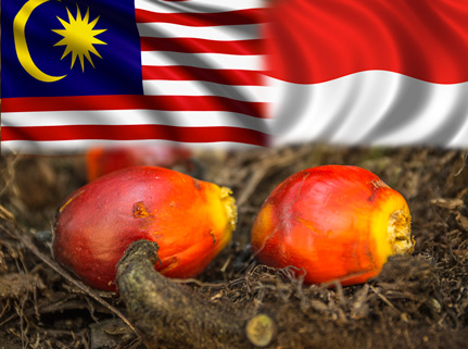 council-palm-oil-Producing-Countries-2015