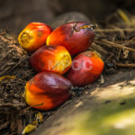 Low uptake of sustainable palm oil