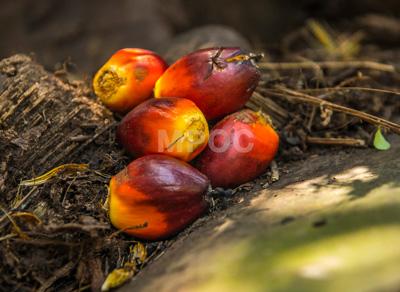palm-oil-2015