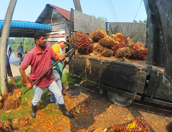 people-palm-oil-2015