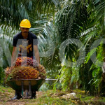 TPPA, Labour Rights and Palm Oil