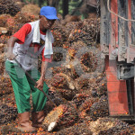 Apology Sought for Italian Slurs against Palm Oil