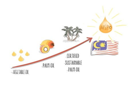 Evolution-sustainable-palm-oil