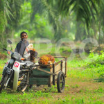 Western Media Still Biased against Palm Oil