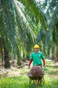 palm-oil-worker-whellbarrow