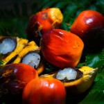 Actions speak louder than words:  The conflicting intentions of many RSPO members