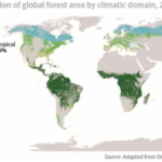 Status and trends of global forests